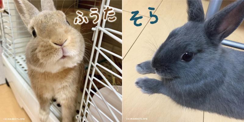 颯太(ふうた)と颯空(そら)の画像