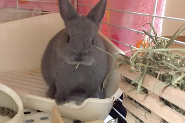 ウサギのお世話「トイレ」