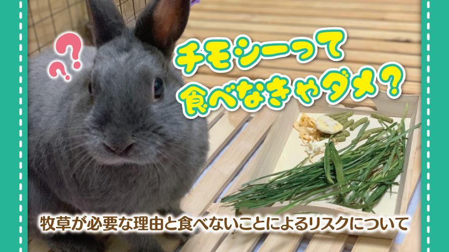 ウサギとチモシーの必要性に関する記事アイキャッチ画像